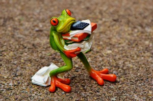 Picture of frog carrying books and papers